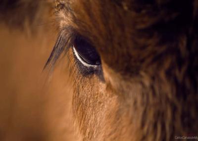 Mirada animal en Nada sucede sin antes ser un sueño
